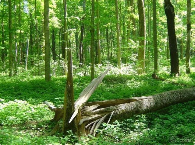 treefallsinforest